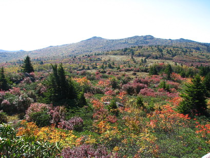 a view of RhododendronGap